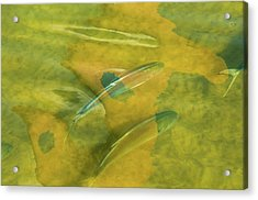 Acrylic Print featuring the photograph Painterly Fish by Carolyn Dalessandro