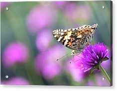 Acrylic Print featuring the photograph Painterly Painted Lady 2 by Brian Hale