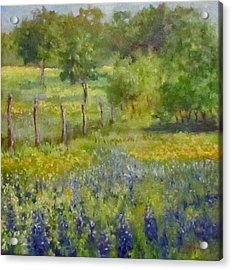 Painting Of Texas Bluebonnets Acrylic Print by Cheri Wollenberg