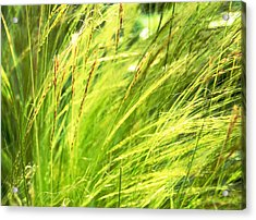 Painting The Wildgrass Acrylic Print by Jean Booth
