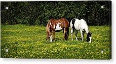 Paints N Buttercups 2 Acrylic Print
