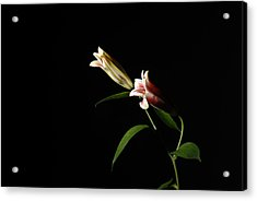 Pair Acrylic Print by Deepak Pawar