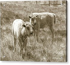 Acrylic Print featuring the photograph Pair Of Baby Buffalos by Rebecca Margraf