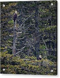 Acrylic Print featuring the photograph Pair Of Eagles by David A Lane