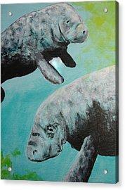 Pair Of Florida Manatees Acrylic Print by Susan Kubes