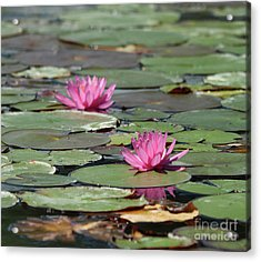 Pair Of Pink Pond Lilies Acrylic Print