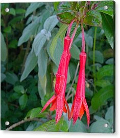 Pair Of Sweet Hanging #flowers At The Acrylic Print