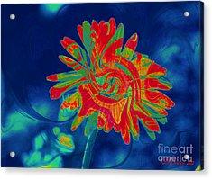 Paisley Gerber Acrylic Print