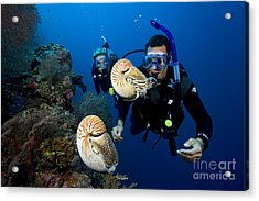 Palau Underwater Acrylic Print by Dave Fleetham - Printscapes