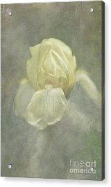 Acrylic Print featuring the digital art Pale Misty Iris by Lois Bryan