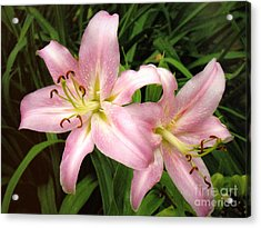 Acrylic Print featuring the photograph Pale Pink Beauties by Sue Melvin
