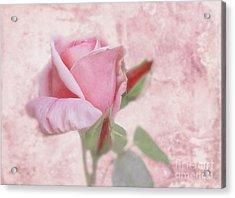 Pale Pink Rose Acrylic Print