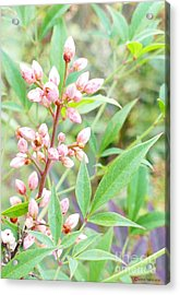 Acrylic Print featuring the photograph Pale Powder Pink Plant by Ivana Westin
