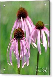 Pale Purple Acrylic Print by Marty Koch