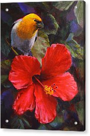 Acrylic Print featuring the painting Palila And Hibiscus - Hawaiian Painting by Karen Whitworth