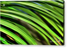 Acrylic Print featuring the photograph Palm Abstract By Kaye Menner by Kaye Menner