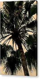 Palm Against The Sky Acrylic Print