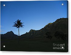 Palm And Blue Sky Acrylic Print by Dana Edmunds - Printscapes