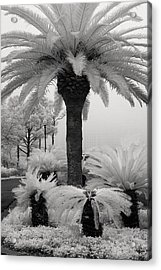 Palm At Gulf Shores Acrylic Print by Fred Baird
