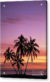 Palm Cluster Acrylic Print by Allan Seiden - Printscapes