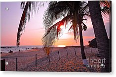 Palm Collection - Sunset Acrylic Print
