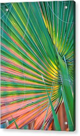 Palm Colors Acrylic Print by Jan Amiss Photography