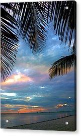 Palm Curtains Acrylic Print by Susanne Van Hulst