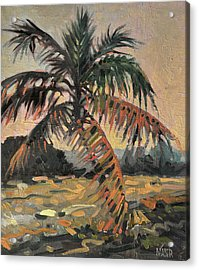 Palm Acrylic Print by Donald Maier