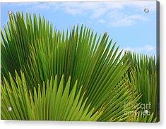 Palm Fans Acrylic Print