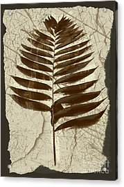 Palm Fossil Sanstone  Acrylic Print by Delynn Addams