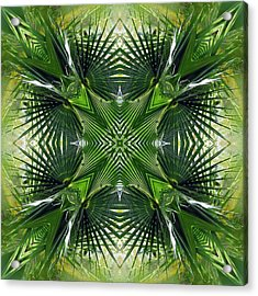 Acrylic Print featuring the photograph Palm Frond Kaleidoscope by Francesa Miller