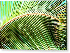 Acrylic Print featuring the photograph Palm Frond Sway by D Davila
