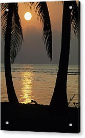 Palm Fronds And Sunset Over Caribbean Acrylic Print