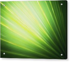 Palm Fronds Acrylic Print
