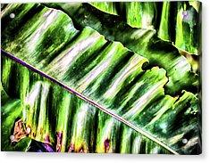 Palm Fronds Up Close Acrylic Print