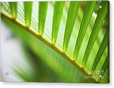Palm Greenery Acrylic Print