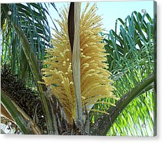 Palm In Bloom Acrylic Print by Evelyn Patrick