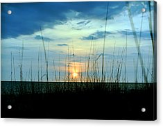 Palm Island Acrylic Print by Anthony Baatz