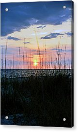 Palm Island II Acrylic Print by Anthony Baatz