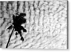 Palm Acrylic Print by Karl Manteuffel