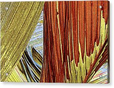 Palm Leaf Abstract Acrylic Print by Ben and Raisa Gertsberg