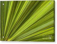 Palm Leaf Abstract Acrylic Print by Elena Elisseeva