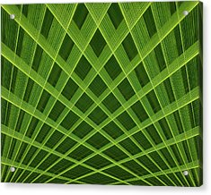 Palm Leaf Composite Acrylic Print