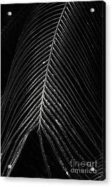 Acrylic Print featuring the photograph Palm Leaf by Deborah Benoit