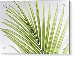 Palm Leaf Acrylic Print by Elena Elisseeva