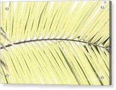 Palm Leaf Acrylic Print by Gaspar Avila