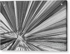 Palm Leaf In Black And White Acrylic Print by Elena Elisseeva