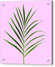 Palm Leaf Acrylic Print by Tony Cordoza