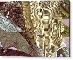 Palm Leaves And Orange Tree Acrylic Print by Stephen Mack
