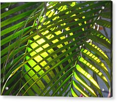 Palm Leaves In Sun Acrylic Print